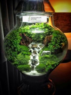 Bonsai Terrarium For Landscaping Miniature Inside The Jars 68 - DecOMG Mini Terrarium, Terrarium Scene, Aquarium Terrarium, Terrarium Plants, Glass Terrarium, Terrarium Ideas, Ideas Florero, Fairy Garden Images, Bonsai