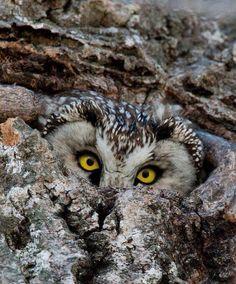 Tengmalm's Owl, Greetings from Finland - Tarja Mäki All Birds, Birds Of Prey, Beautiful Owl, Animals Beautiful, Owl Writing, Power Animal, Owl Pictures, Owl Always Love You, Horned Owl