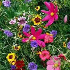 """Bold Color Gardens Learn how to use bold color combinations to create a garden with a big """"wow"""" factor."""