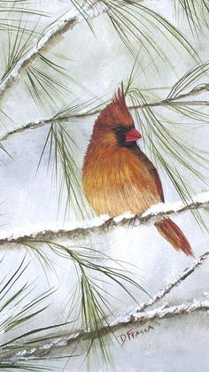 Female Cardinal in Snow // #fineart