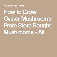 How to Grow Oyster Mushrooms From Store Bought Mushrooms - All