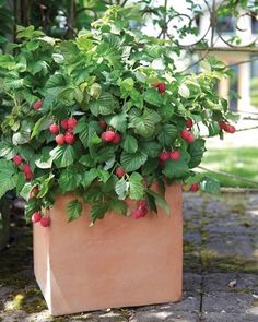@countrylivingmag is sharing the 7 easiest edibles to grow in your garden, including berries!