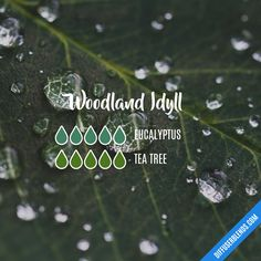 Woodland Idyll - essential oil blend for diffuser. oil.social/v0rzt85v