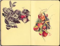 Moleskine nice drawings especially the one with red/black