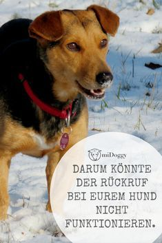 Wenn Der Ruckruf Nicht Klappt Midoggy Community Hundeerziehung Welpen Hundetraining