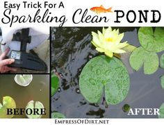 Easy trick for a sparkling clear pond - get the gunk out within hours!