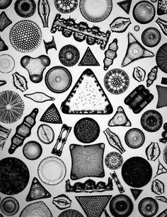 顕微鏡を使って撮影された「アート」|WIRED.jp