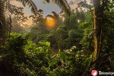 The jungle of Yasuni Reserve during sunrise, Yasuni Reserve, Ecuador.