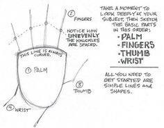"You can practice ""fleshing out"" your simple palm-fingers-thumb-wrist sketches by drawing from photographs of hands in action… or use your own non-drawing Drawing Skills, Drawing Lessons, Drawing Tips, Art Lessons, Drawing Hands, Learn Drawing, Figure Drawing, Form Drawing, Drawing Board"