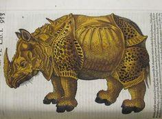Rhinoceros, extrait du Historia Animalium de Conrad Gessner, 1551, le plus important ouvrage de zoologie publié - Bfm Limoges.