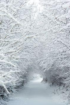 Snowy path - Somerset, England