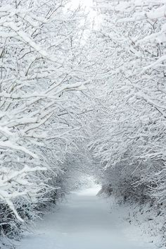 Snowy path - Somerset, England