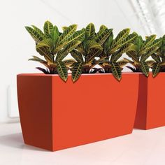 Cabriolet Super Trough on Container Connection Inside Garden, Green Office, Eco Green, Office Plants, Balcony Garden, Potted Plants, Cube, Planter Pots, Container