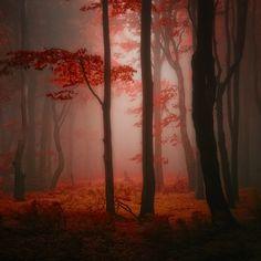 Les merveilles de la nature par Janek Sedlar