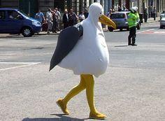 Seagull Costume