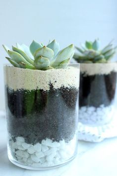 Stunning Diy Succulents For Indoor Decorations 15