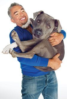 By Cesar Millan Do you ever wonder what your dog would say if he could talk? Do you ever wonder what's on his mind when he looks up at you with those big, warm, brown eyes? You might be surprised to learn that what you're doing to your dog is confusing him—maybe even driving him crazy. Here are five bad habits you need to stop before they wreck your relationship.