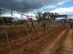 Huertos Compartidos Tutelados de Torrent (Valencia). Primeras cosechas - Huertos Compartidos