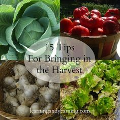 For gardeners, the harvest is the sweet reward of our labors. Here are 15 tips to help ensure a bountiful harvest.