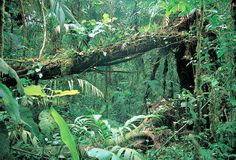 Rain Forest Layers Theme for Preschoolers (and even Elementary)...site has wonderful activities for the different forest layers.