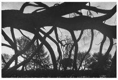 nervoustemple:  Burned Trees   René Groebli