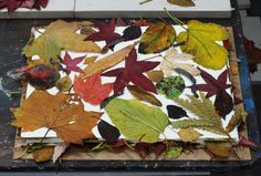 leaf monoprint process | Cassandra Tondro Green Art Blog