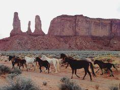 wild horses in monument valley Wild At Heart, Monument Valley, All The Pretty Horses, Beautiful Horses, Beautiful Images, Beaux Serpents, Desert Aesthetic, Desert Dream, Desert Rose