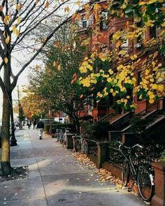 Montréal Pumpkin Leaves, Autumn Leaves, Camping Friends, Hello November, Weather Seasons, Autumn Nature, Fall Season, Architecture, Holiday Fun