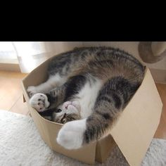 They always think they fit in these kinds of boxes...cute stretch.