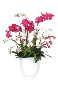 Mixed Phal Bowl Silk Flower Arrangement