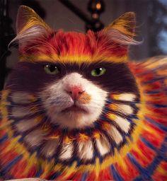 burtonsilverheatherbuschwhypaintcats1