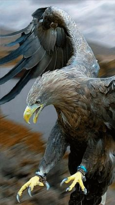 48213582 How Eagle hunt its prey? Eagle Images, Eagle Pictures, Bird Pictures, Hawk Pictures, Nature Animals, Animals And Pets, Cute Animals, Prey Animals, Exotic Birds