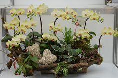 Best Orchid Arrangements With Succulents And Driftwood - Decomagz Orchid Centerpieces, Orchid Arrangements, Orchids Garden, Orchid Plants, Ikebana, Growing Sunflowers, Silk Plants, Orchid Care, Cactus Y Suculentas
