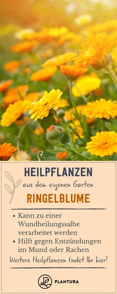 The 10 best medicinal plants from your own garden - Plantura Types Of Plastics, Perspective On Life, Wound Healing, Seed Starting, Calendula, Alternative Health, Medicinal Plants, Shrubs, Gardening Tips
