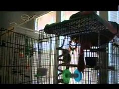 Parrot Caught Singing Let the Bodies Hit the Floor