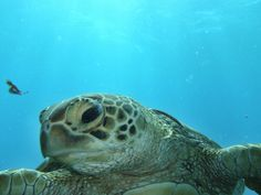 Great Barrier Reef - Lonely Planet