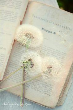 Books are so beautiful