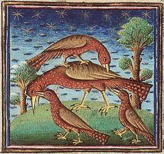Bestiarios Medievales: abubilla
