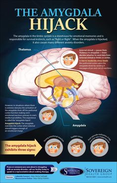 Psychology infographic & Advice Infographic: The Amygdala Hijack www.sovhealth.com ... Image Description Infographic: The Amygdala Hijack www.sovhealth.com