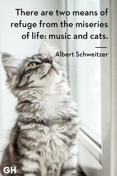 Here are some cat quotes that pretty much hit the nail on the head! Catch Cat Quotes Sum Up Cats Purr-fectly - World's largest collection of cat memes and other animals Cute Animals With Funny Captions, Funny Cat Pictures, Cute Baby Animals, Animal Pictures, Cutest Animals, Funny Cat Memes, Funny Cat Videos, Funny Cats, Cats Humor