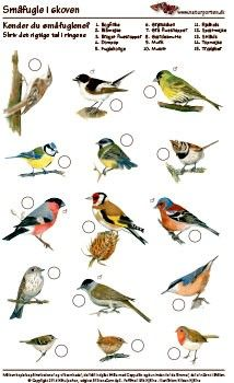 Kender du småfugle i skoven