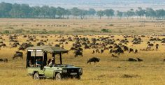 Everything you need to know about a Wildebeest Migration safari: where to go, where to stay, and when to see the herds in the Masai Mara and Serengeti. Honeymoon Vacations, Safari Adventure, Game Reserve, African Safari, Africa Travel, Where To Go, Tourism, White Sky, Camps