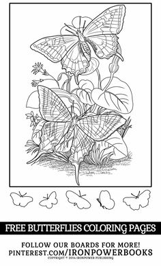 FREE Butterflies Coloring Pages only @ironpowerbooks!  | Please use freely for personal non-commercial use | For a complete Butterfly Coloring Pages collection visit http://www.amazon.com/Butterfly-Coloring-Pages-Butterflies-Adults/dp/1500501255