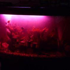 16 Best Aquarium And Fish Tank Led Lighting Images Fish Tanks