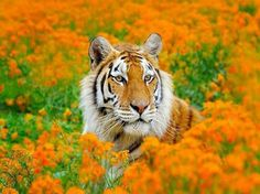 Within the flowers | Cats BIG &