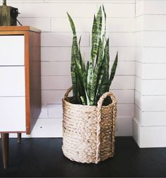 loving this snake plant in a basket planter