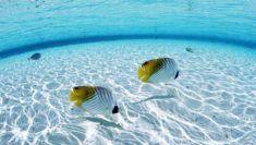 ryby tapeta_5
