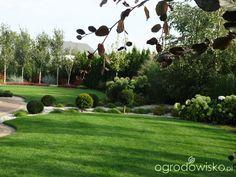 Na zielonej... trawce :) - Forum ogrodnicze - Ogrodowisko