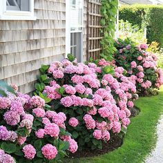 36 Beautiful Flower Beds in Front of House Design Ideas - beds design flower front homikucom house ideas # Hydrangea Tree, Hydrangea Garden, Hydrangea Flower, Hydrangeas, Azaleas Landscaping, Front Yard Landscaping, Landscaping Ideas, Patio Ideas, Ideas Para El Patio Frontal