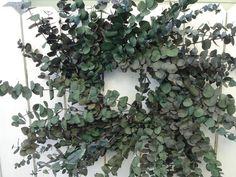 Twig Wreath, Green Wreath, Hydrangea Wreath, Floral Wreath, Indoor Wreath, Eucalyptus Wreath, Floral Supplies, Hunter Green, Wreaths For Front Door